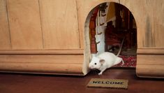 Study: Only 40% Of Mice Have Little Welcome Mat, Doorway Leading To Tiny Home Inside Wall