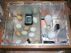 I've been wanting to hatch eggs since I first thought about getting chickens. I did...