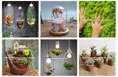 www.kdeco.ro www.facebook.com/kdeco.ro www.wonderfulterrarium.ro Facebook, Design, Plant, Design Comics