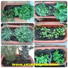 And then I live in an apartament? So I still growing my own #herbs in the #balcony ☆ #oregano #basil #chive #thyme #rosemary #bayleaf #pennyroyal #mint #coriander #curly and #common #parsley #balconygardening #balconygarden #urbangardening #urbangarden #urban #garden #gardening #urbangardeningportugal #algarve #love #organicfood #organicherbs #organicspices #organics #healthyfood #healthychoices #healthlife #healthlifestyle #food #seasoning and #spices