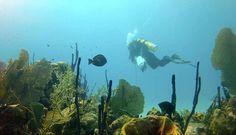 Sharky's Shop - Diving Schools