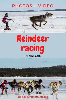 Reindeer racing is a popular sport activity in Lapland, Finland. Best Picture For extreme Outdoor Travel Route, Top Travel Destinations, Us Travel, Travel Goals, Finland Travel, Norway Travel, Sweeden Travel, Brazil Travel