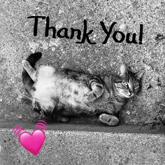 I just wanted to post a quick thank you to my amazing customers. Honestly you all rock my world! Work has been great clients have been superb. I am just really loving my job right now and it is all because of YOU! So THANKYOU! com ..................................................... #bookcovers #indiebooks  #custombook #ebooks #ebookcoverdesign #ebookcover #graphicdesigner #ilovebooks  #bookcoversforsale #bookstagram #writers #imwritingabook #indieauthor #indiewriter #photomanipulation…