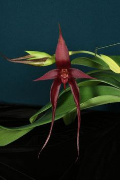 Latest Orchid Awards - The American Orchid Society