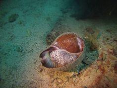 Sea Shells in the Saronic Gulf
