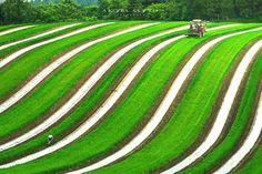 20167/3at 北見市端野町緋牛内 白いラインが美しすぎる畑。 / Sai-Jiki 彩時記 #北海道 #Hokkaido