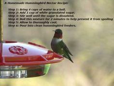 Hummingbird Nectar Recipe How To Make Homemade Hummingbird Food - Making Homemade Hummingbird Nectar The Hummingbird Food Recipe Is Actually A Hummingbird Food Formula Or A Sugar And Water Ratio Ratio That Is Cups Of Water To Cup Sugar Homemade Bird Houses, Bird Houses Diy, How To Attract Hummingbirds, How To Attract Birds, Humming Bird Feeders, Humming Birds, Homemade Hummingbird Nectar, Hummingbird Feeder Recipe, Make Hummingbird Food