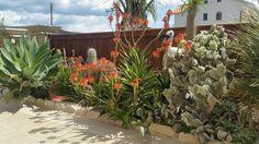Cactus bed