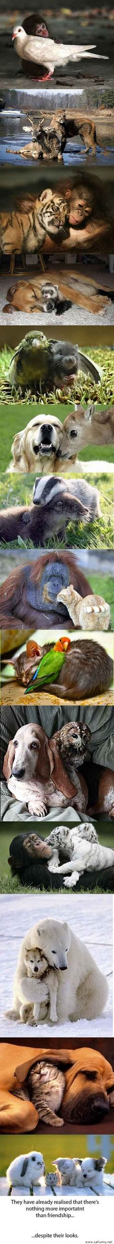 unusual animal friendships