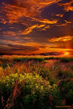 ~~Lost in the World | orange and gold autumn landscape in Wisconsin | Horizons by Phil~Koch~~