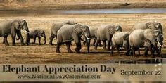 National Elephant Appreciation Day Show your appreciation today by visiting the elephants at your local zoo, no zoo then maybe a movie! National Days In September, September 22, National Elephant Day, National Voter Registration Day, National Day Calendar, Important Dates, The Hobbit, Image Search, Appreciation