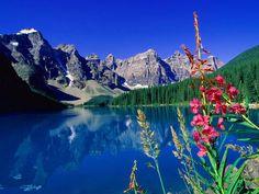 Alaska Scenery Mountains Flowers | Lake scenery flowers mountain reflection HD Wallpaper