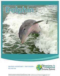 Dolphin Unit Study
