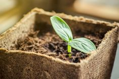 Seed Starting Gardening season is upon us! Get a head start on the spring garden and mix your own seed starting mix. It's easy and budget-friendly! Here's a great how-to article to get you started. Home Vegetable Garden, Tomato Garden, Garden Seeds, Planting Seeds, Compost Soil, Florida Gardening, Bountiful Harvest, Square Foot Gardening, Plant Growth