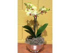 Take Home a Care Affair Centerpiece! Purchase one of tonight's beautiful live orchid centerpieces, and bring home the fond memories of raising funds for CURE Childhood Cancer! Centerpieces are limited — be sure to make your purchase on Bidding Fo...