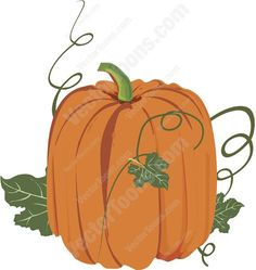 Tall Elongated Orange Pumpkin With Green Stem And Vines | Stock ...