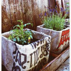 plastic milk crates + burlap coffee sacs = cute garden!