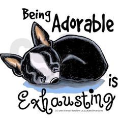 Uplifting So You Want A American Pit Bull Terrier Ideas. Fabulous So You Want A American Pit Bull Terrier Ideas. Boston Terrier Kunst, Boston Terrier Love, Shih Tzu, Boston Terrior, Pitbull Terrier, Terrier Puppies, Bulldog Puppies, Terrier Mix, Cute Stickers
