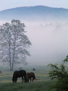 Spring Tennessee Morning - Cades Cove www.pantherknobco...