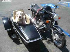The hubs can bond with Jessie! You think she would ride in the sidecar or make him!!???? 1973 BMW R75/5 With Sidecar & Dog.