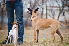 8 People Pleasing Dog Breeds