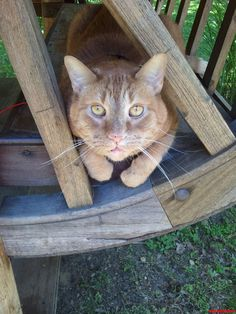My Cat Boo Sitting Outside In The Tea House - http://cutecatshq.com/cats/my-cat-boo-sitting-outside-in-the-tea-house/