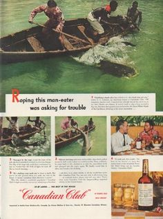 """Description: 1951 CANADIAN CLUB vintage print advertisement """"Roping this man-eater""""-- Roping this man-eater was asking for trouble ... """"Catching a shark alive has a hitch to it -- the shark may get you,"""" writes C. C. Calahan, an American friend of Canadian Club ... Canadian Club Blended Canadian Whisky -- Size: The dimensions of the full-page advertisement are approximately 10.5 inches x 14 inches (27cm x 36cm). Condition: This original vintage full-page advertisement is in Very Good…"""