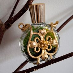 this is pretty cool Bottle Terrarium, Terrarium Plants, Vintage Perfume Bottles, Something Old, Green Life, Pretty Cool, Craft Fairs, Glass Bottles, Tech Accessories