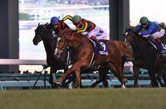 """The Japanese Triple Crown Horse"" Orfevre ""ARIMA KINEN 2011"""