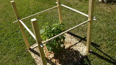 Bygg ett enkelt buskstöd av ribbor och rundstav   Hobby och hantverk   svenska.yle.fi Stepping Stones, Garden Tools, Vegetables, Fruit, Outdoor Decor, Plants, Stair Risers, Yard Tools, Vegetable Recipes