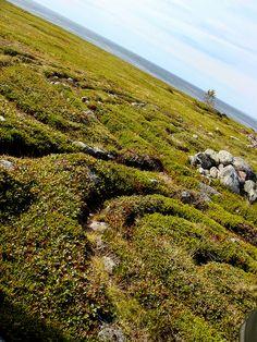 Ancient labyrinth on Zayuatskiy Island