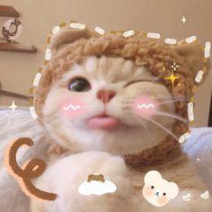 Cute Baby Cats, Cute Little Animals, Cute Cats And Kittens, Kittens Cutest, Worlds Cutest Animals, Cutest Animals On Earth, Gatos Cool, Cute Cat Memes, Cute Cat Wallpaper