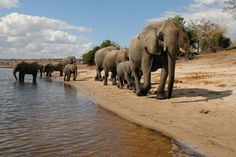"""Zu einigen der schönsten Nationalparks Afrikas führt die Gebeco-Tour """"Naturschätze im südlichen Afrika"""". Etappenziele der 20-tägigen Studienreise sind unter anderem die                         Dünen der Kalahari, Etosha Nationalpark, Chobe Nationalpark und die Viktoriafälle. Twyfelfontein mit den berühmten prähistorischen Felsgravuren sowie Stadtrundgänge in Windhoek und Swakopmund und viele weitere Highlights runden das Afrika-Erlebnis ab. Foto Credit: Grant Atkinson/Botswana Tourism."""