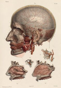 Arteries of the face and nasopharynx by Nicolas Henri Jacob from 'Traité complet de l'anatomie de l'homme' by Marc Jean Bourgery 1831