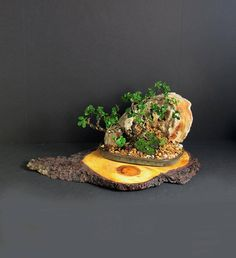 """Natal Plum rock landscape composition """"Summer'17 Fruiting Collection"""" from LiveBonsaiTree by LiveBonsaiTree on Etsy"""