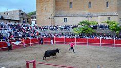 Santacara: Vacas Merino - Fiestas de Santa Eufemia Año 2016 (... Dolores Park, Travel, Cows, September, Fiestas, Viajes, Destinations, Traveling, Trips