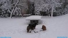 Snow report, Miskolc, Hungary, 2017 January 14th