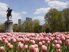Free Things to Do in Boston! We are really looking forward to our new route to Boston in March Boston Vacation, Boston Travel, Boston Things To Do, Free Things To Do, The Places Youll Go, Places To See, Boston Public Garden, In Boston, Boston Strong