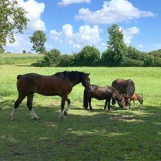 Unsere kleine Pferdeherde #unseretiere #pferde #ponys #gutroyum #urlaubanderschlei #schlei #bauernhof #landleben #landlust #urlaubaufdembauernhof #schleswigholstein #gutshof #brodersby #instadaily #vacation #welltraveled #bestvacations #travel  #wanderlust #slowtourism #auszeit #entspannung #hygge #lagom #family #familytime
