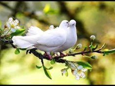 In the spring , love birds** Pretty Birds, Love Birds, Beautiful Birds, Animals Beautiful, Cute Animals, Beautiful Couple, Kinds Of Birds, White Doves, Tier Fotos