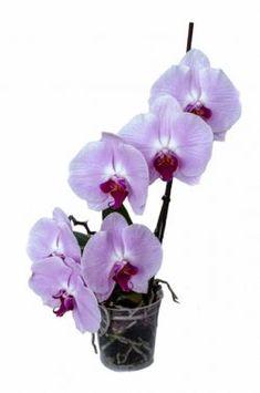 Ako sa starať o Orchideu? Ds, Glass Vase, Flowers, Plants, Decor, Compost, Decoration, Plant, Decorating