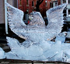 Eagle--I wish I could do that with ice!!