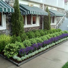 Nice formal design using lambs ear in front, arborvitaes in back, salvias and 2 layers of boxwoods. spirea on the sides.