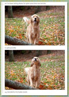 Leaf Smile - funnydogsite.com #dogs #funny #cute