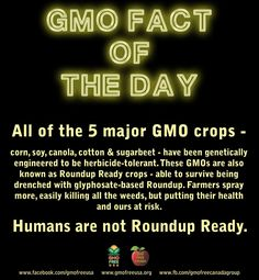 Humans are not Roundup Ready.  READ: http://www.gmwatch.org/index.php/news/archive/2014/15279-pesticide-approvals-misleading-and-roundup-most-toxic-of-9-pesticides-tested READ: http://www.ncbi.nlm.nih.gov/pmc/articles/PMC3955666/ Glyphosate studies: http://gmofreeusa.org/gmos-are-top/gmo-science/glyphosate-studies/ READ & WATCH: http://www.nytimes.com/2014/05/12/us/agent-oranges-long-legacy-for-vietnam-and-veterans.html