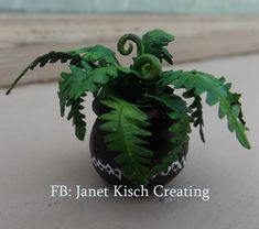 miniature fern in pot