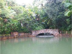 El yunque national forest wildlife el yunque my for Bano grande puerto rico