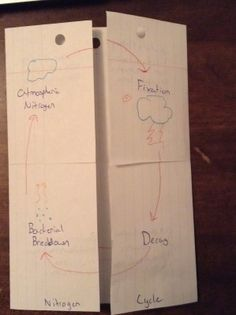 Nitrogen and carbon cycle foldables