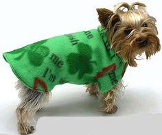 #CPirishluck  He looks just like my neighbor's dog!  Happy Irish Day, puppy.