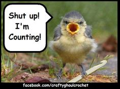 i'm counting bird